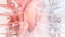 Circulatory reveal