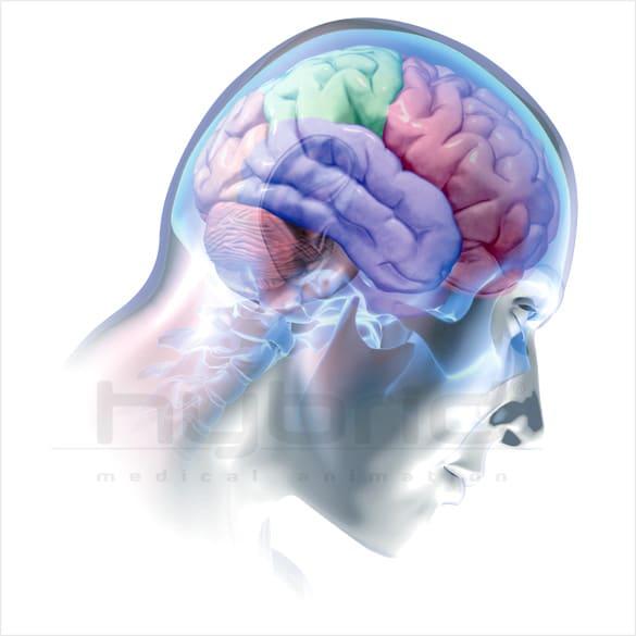 Brain And Lobes Hybrid Medical Animation