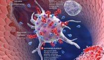 Stable fibrin clot