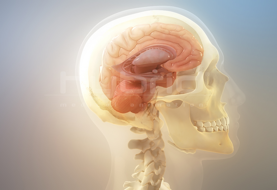 Brain Anatomy Hybrid Medical Animation